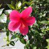 Dr.Poonam Agrawal | Lybrate.com