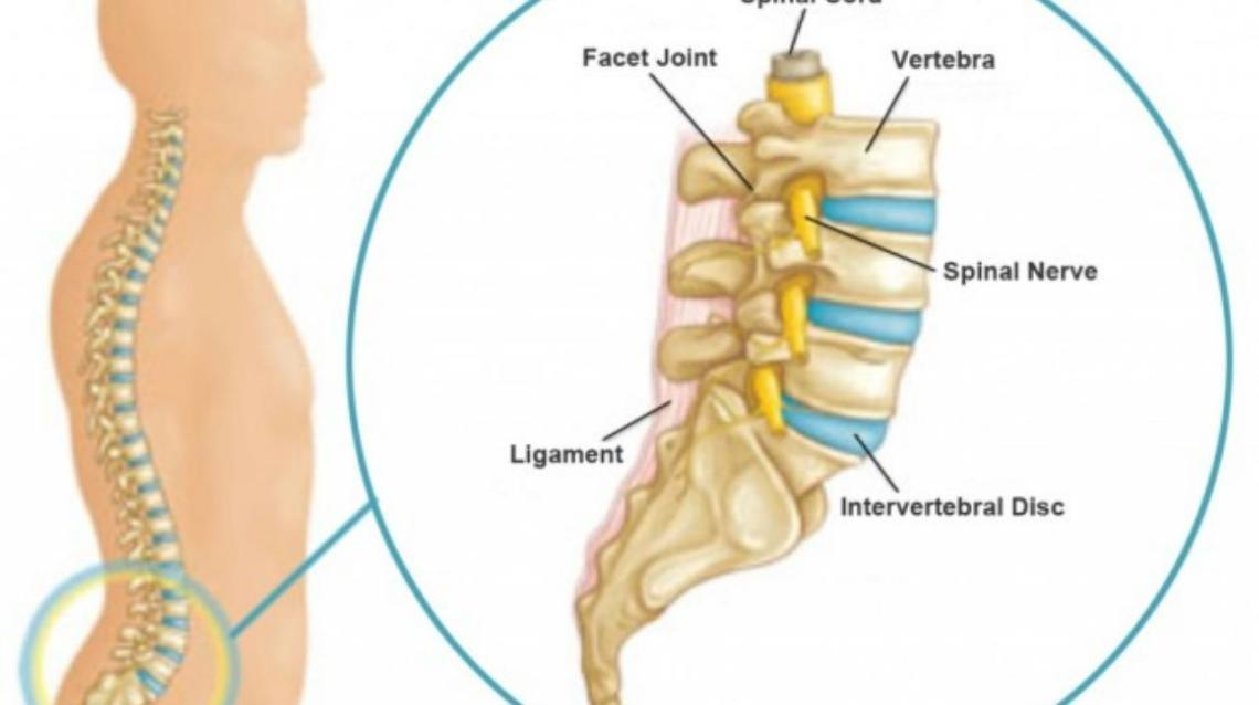 Know Your Back Or Lumbar Spine