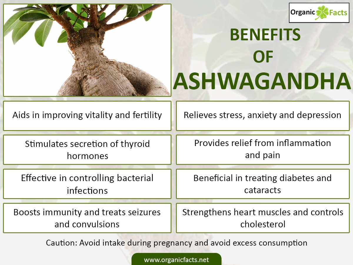 Health Benefits of Aswgandha Meditional Plant - By Dr ...