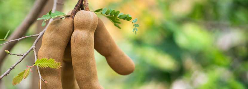 tamarind root health benefits