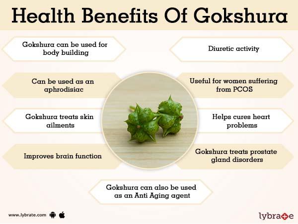 Gokshura Benefits, Uses And Its Side Effects | Lybrate