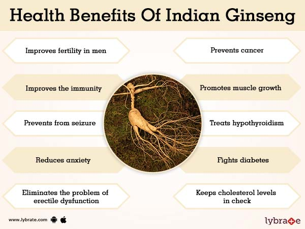 Benefits of Indian Ginseng And Its Side Effects | Lybrate