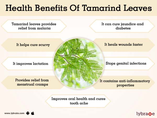 Tamarind Leaves Benefits And Its Side Effects | Lybrate