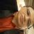 Dr Ashfaque Thakur,  | Lybrate.com