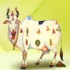 Jain's Cow Urine Therapy Health Clinic Image 3