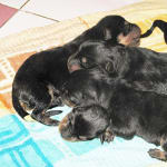 Dr Sunetra's PetVet Veterinary Clinic, Borivali Image 4