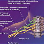Ortho Neuro Chiropractic Physiotherapy Clinic Image 6