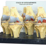 Ortho Neuro Chiropractic Physiotherapy Clinic Image 1