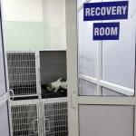 Acumed Veterinary Specialty Image 9