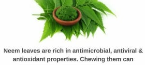 Neem Benefits And Its Side Effects   Lybrate
