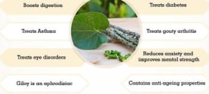 Giloy Benefits And Its Side Effects | Lybrate