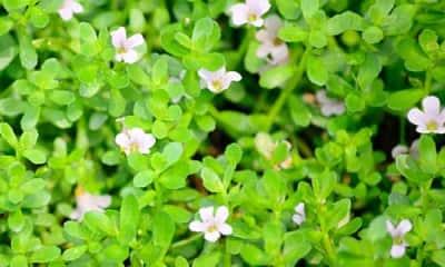 chloroquine phosphate manufacturers in india