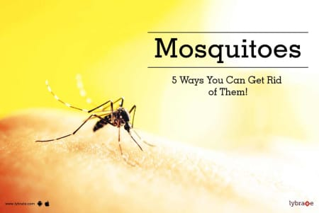 Home Remedies For Mosquitoes Tips & Advice From Top Doctors