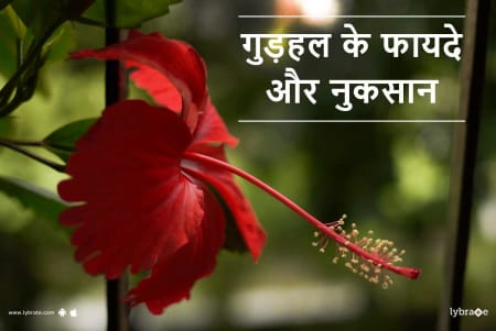 Hibiscus Benefits And Side Effects In Hindi गडहल क