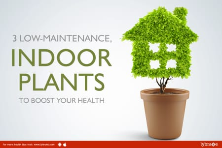3 Low Maintenance Indoor Plants To Boost Your Health