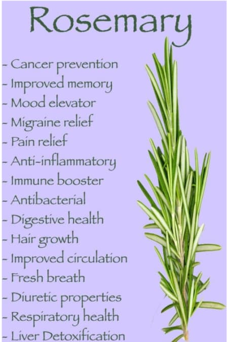 Rosemary Benefits And Its Side Effects | Lybrate