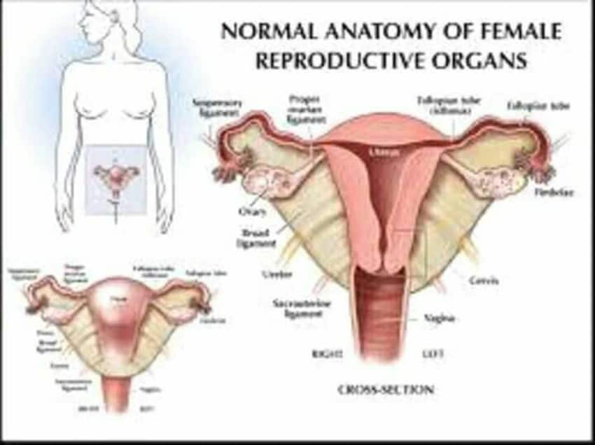 Female Reproductive Organ By Dr Swarup Kumar Ghosh Lybrate