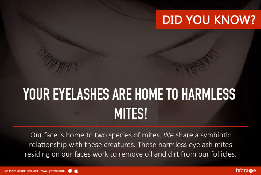 Super Fact Of The Day Your Eyelashes Are Home To Harmless Mites
