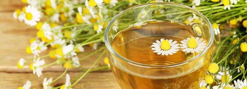Benefits of Chamomile Tea And Its Side Effects   Lybrate