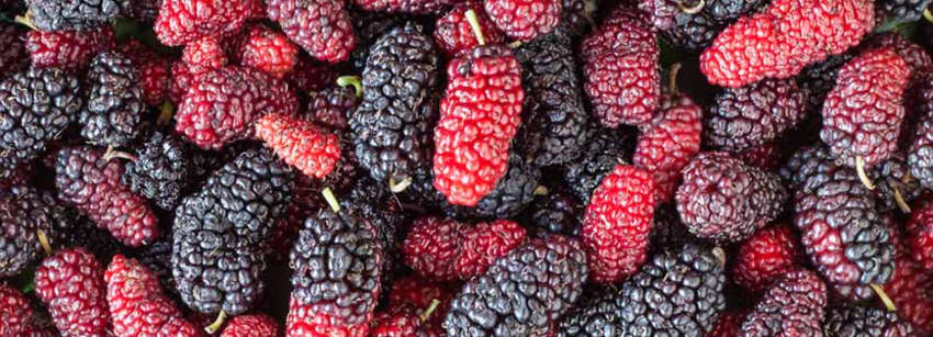 Mulberry Fruit Benefits And Its Side