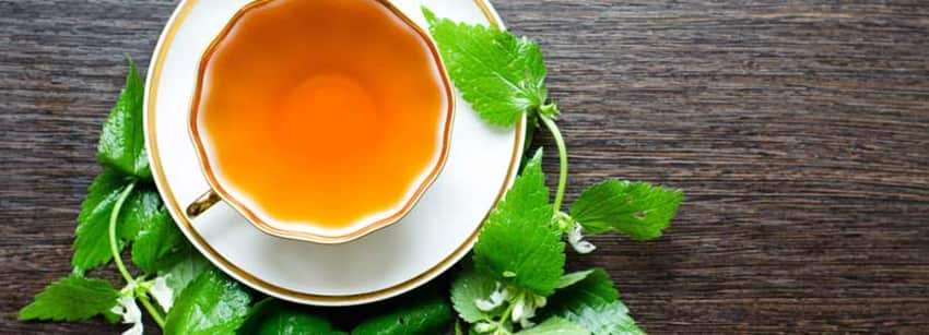 Nettle Tea And Its Side Effects