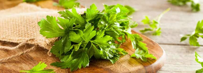 Benefits of Parsley And Its Side Effects | Lybrate