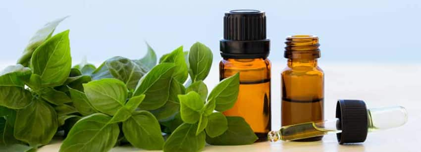 Basil Oil Benefits And Its Side Effects | Lybrate
