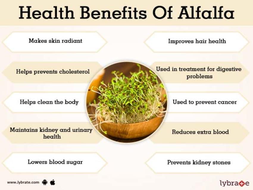 Sbl Alfalfa Malt, Homeopathy Family Energy Health Tonic