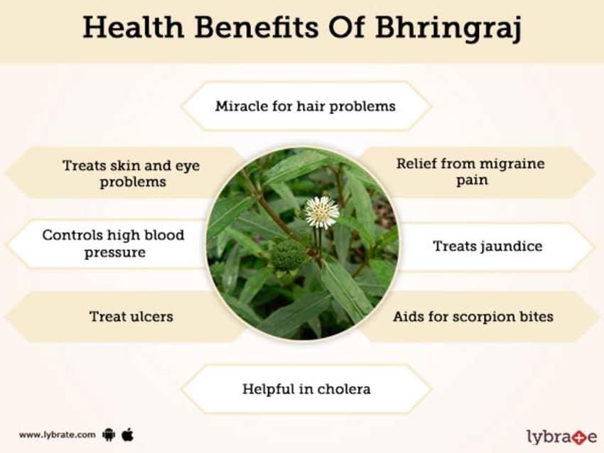 image of bhringaraj and its benefits