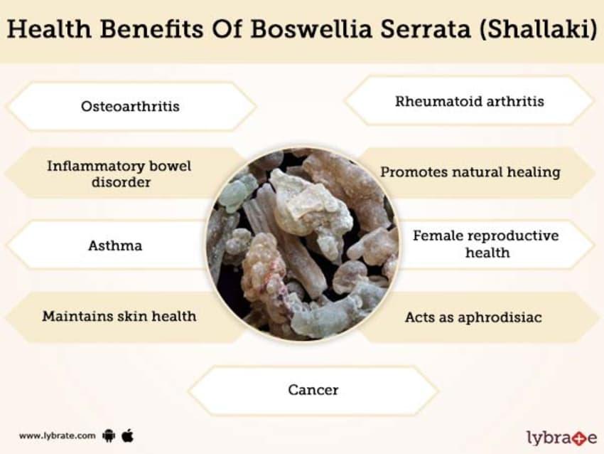 Boswellia Serrata (Shallaki) Benefits And Its Side Effects | Lybrate