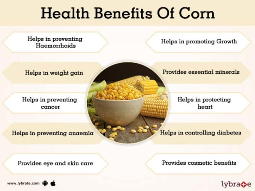 Corn Benefits And Its Side Effects | Lybrate