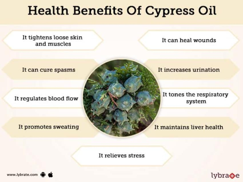 Benefits of Cypress Oil And Its Side Effects | Lybrate