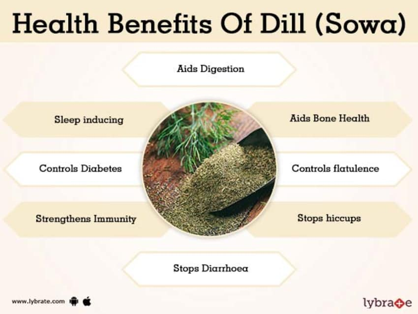 Dill (Sowa) Benefits And Its Side Effects | Lybrate