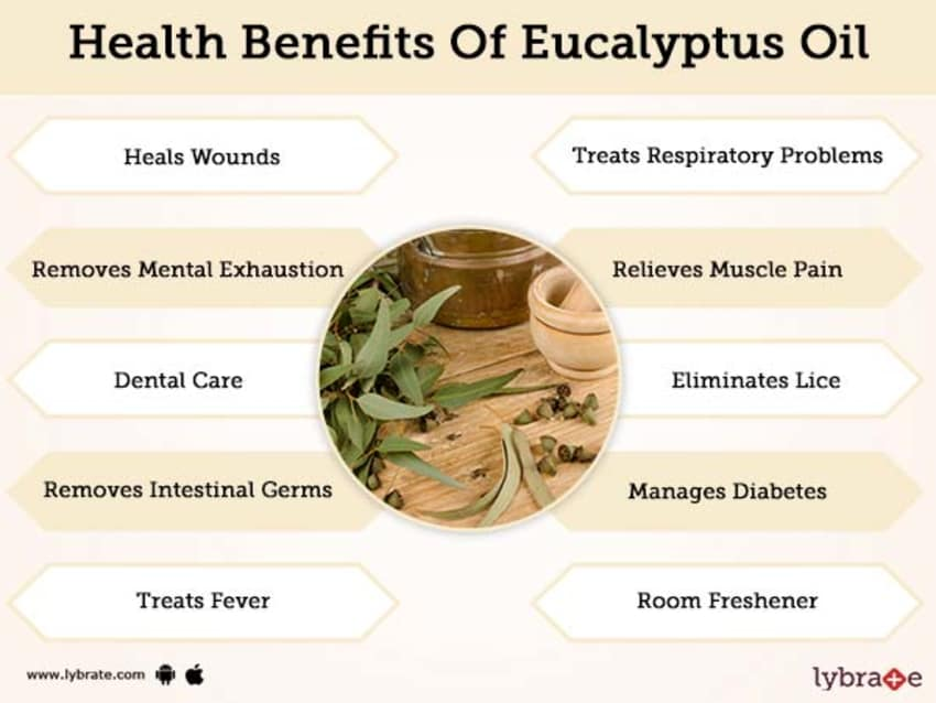 Benefits of Eucalyptus Oil And Its Side Effects   Lybrate