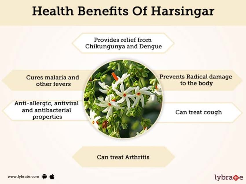 Harsingar Medicinal Uses, Benefits And Its Side Effects | Lybrate