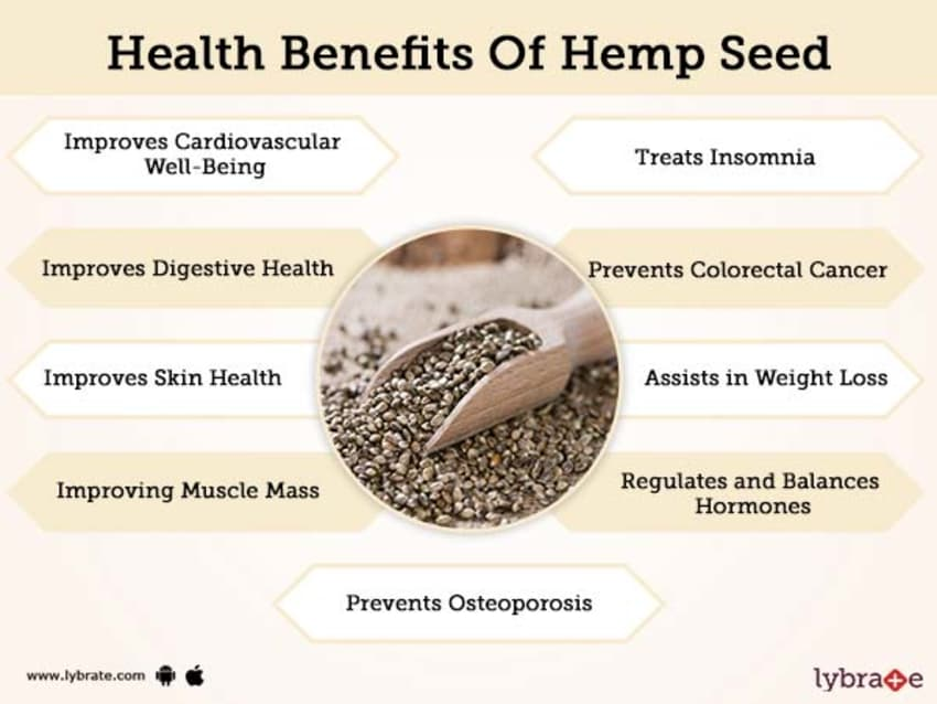 Benefits of Hemp Seed And Its Side Effects   Lybrate