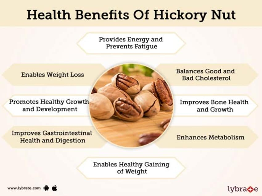 hickory nuts super for weight loss