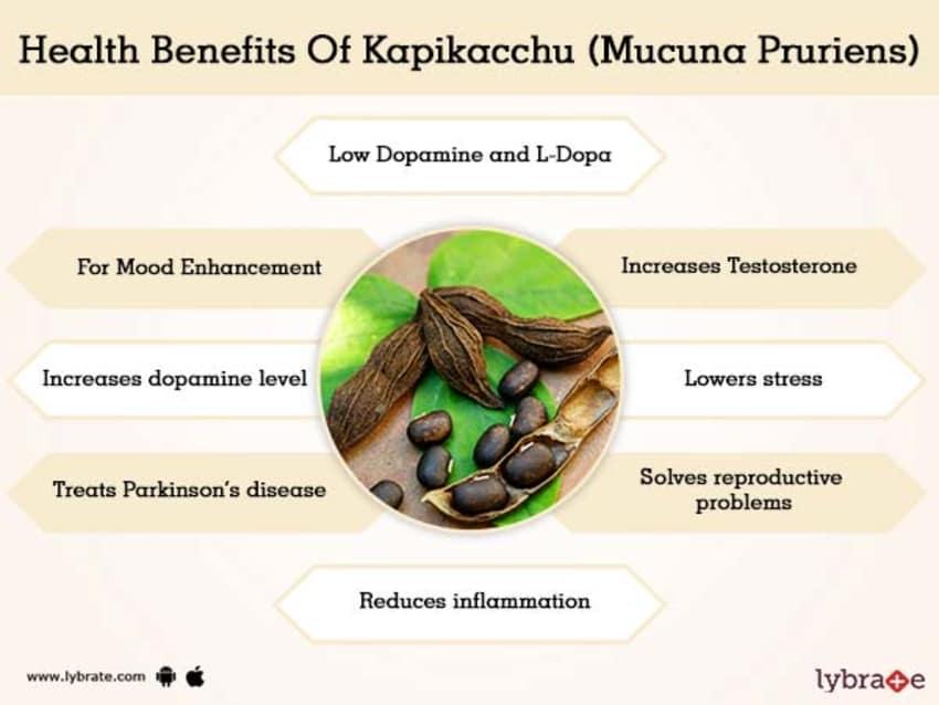 Kapikacchu (Mucuna Pruriens) Benefits And Its Side Effects