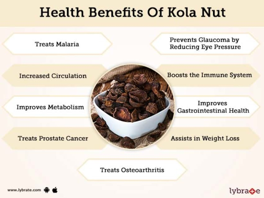 Benefits of Kola Nut And Its Side Effects | Lybrate