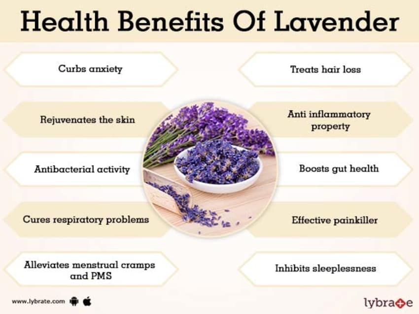 Benefits Of Lavender And Its Side Effects Lybrate