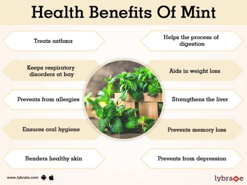 Benefits of Mint And Its Side Effects | Lybrate