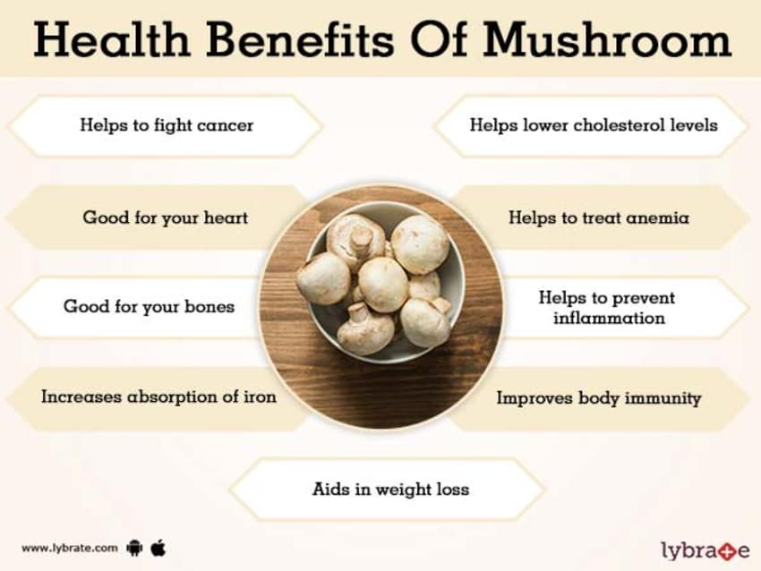 Image result for mushroom benefits