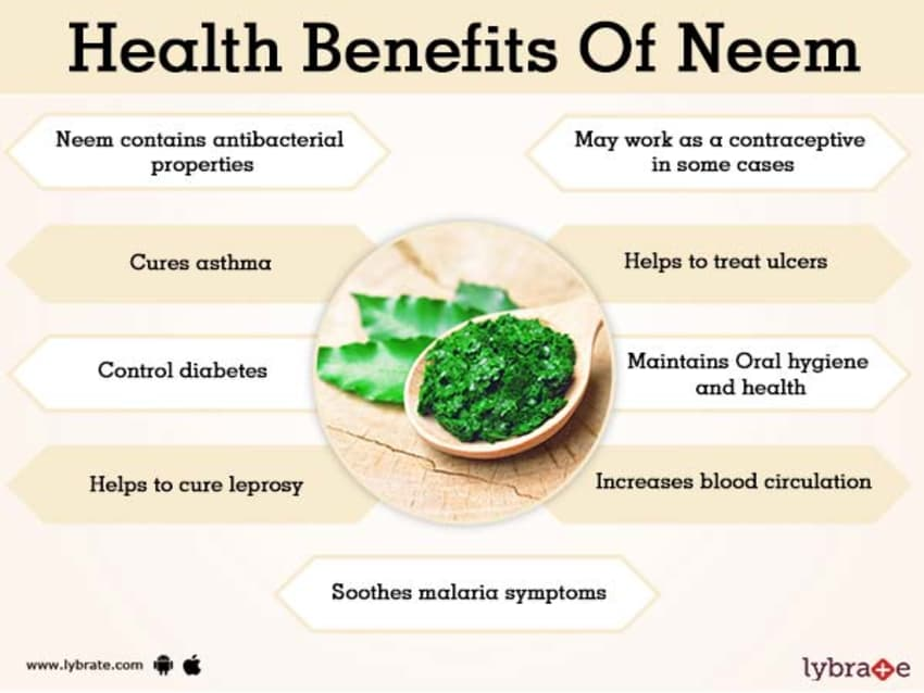 Neem Benefits And Its Side Effects | Lybrate