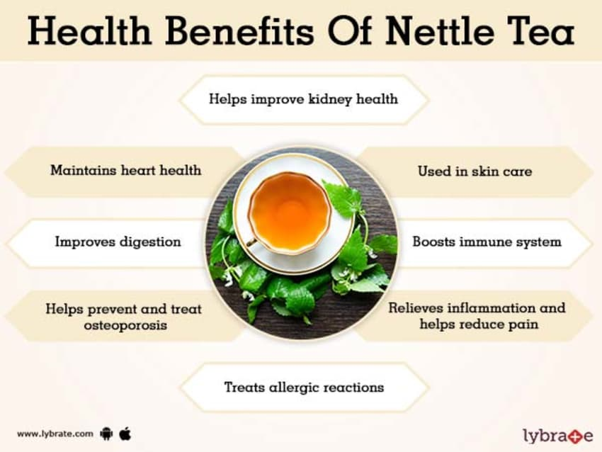 Benefits of Nettle Tea And Its Side Effects | Lybrate