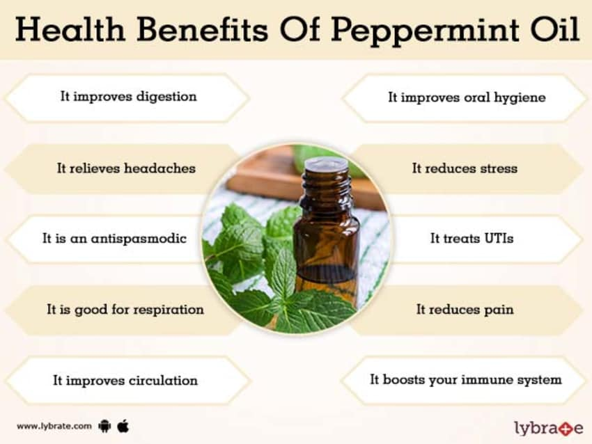 Benefits Of Peppermint Oil And Its Side Effects Lybrate