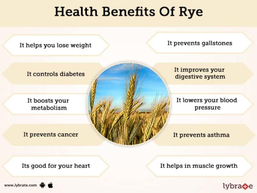 Rye Benefits And Its Side Effects | Lybrate