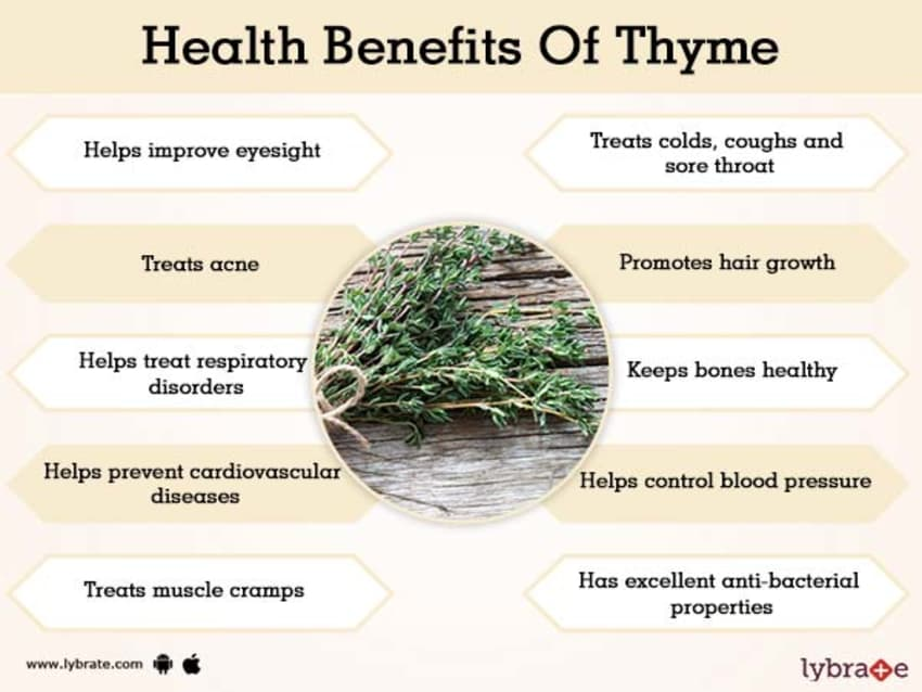 Benefits Of Thyme And Its Side Effects Lybrate