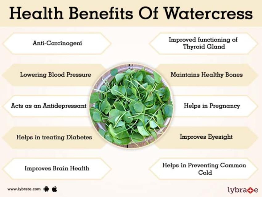 Benefits of Watercress And Its Side Effects   Lybrate