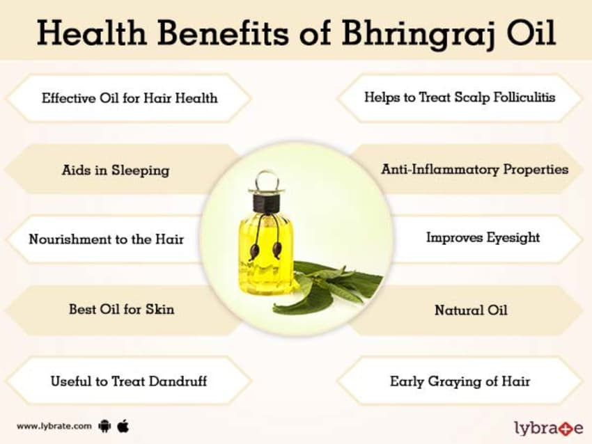 Bhringraj Oil Benefits And Its Side Effects | Lybrate