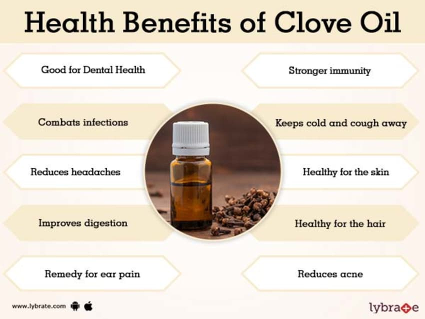 Clove Oil Benefits And Its Side Effects Lybrate